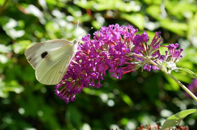 photo fleur et papillon